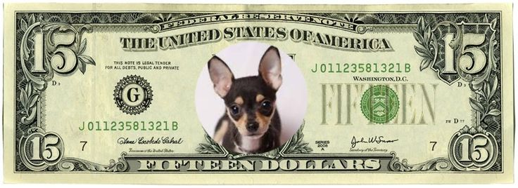 PINTEREST INSIDERS  - Right Now on Opensky we are giving away $15 dollar Shop LuLu gift Cards. In Chihuahua We Trust.