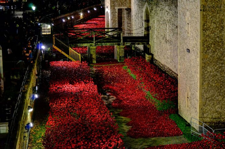 Last year, the breathtaking sea of red ceramic poppies around the Tower of London became world wide famous and brought even more tourists at this old landmark. In fact when I was there hundreds and hundreds of people were trying to catch a glimpse of this beautiful installation named Blood Swept Lands and Seas of Red, even though it was pitch black. Despite that, the sights were quite impressive, even haunting. Unfortunately, every last poppy was removed at the beginning of December.