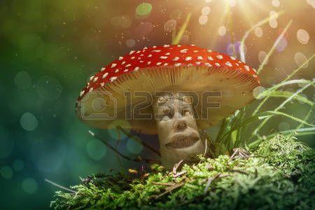 forest mushroom: Fantasie paddestoel in het bos