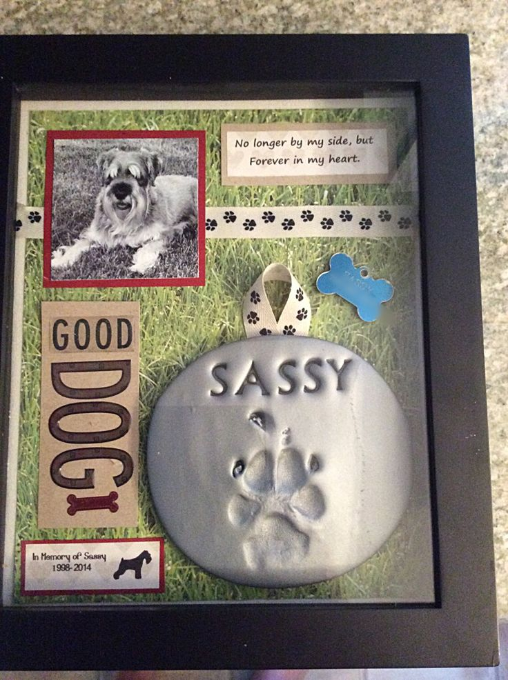 Shadow box in memory of my Sassy Girl. Schnauzers are the best dogs.