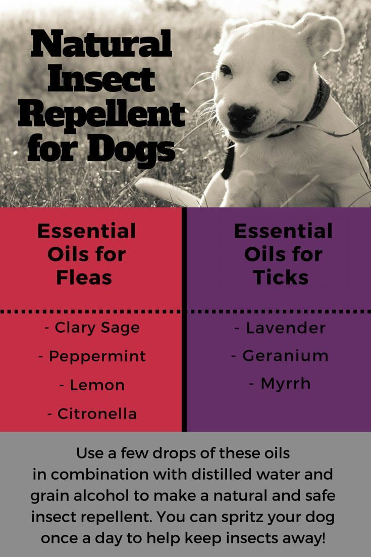Just follow this simple recipe and you can make your own natural and safe tick and flea repellent for your dog!