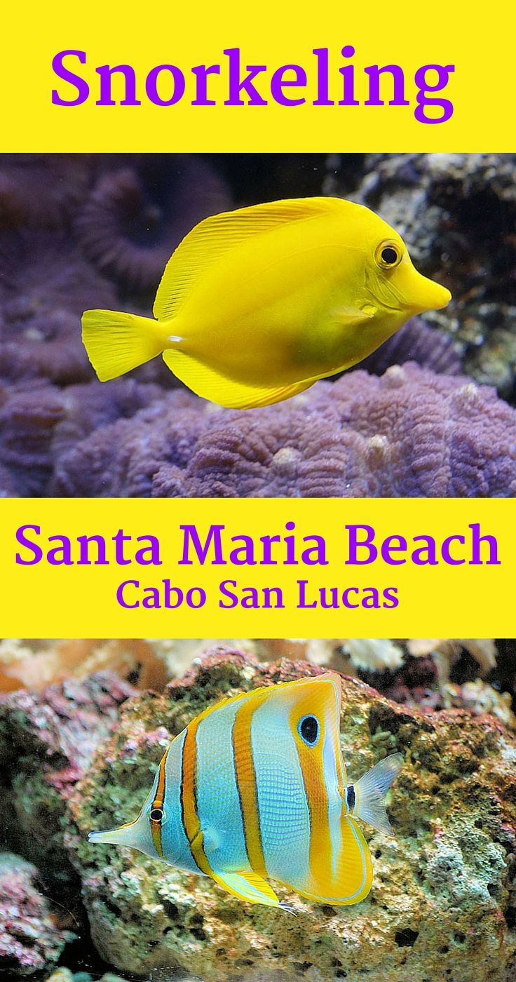 CABO SAN LUCAS | You want to see lots of colorful fish when you snorkel in Cabo San Lucas, right? Santa Maria beach is one of the three best places to snorkel there. Here's what you need to know to visit on your own before the tour boats arrive.