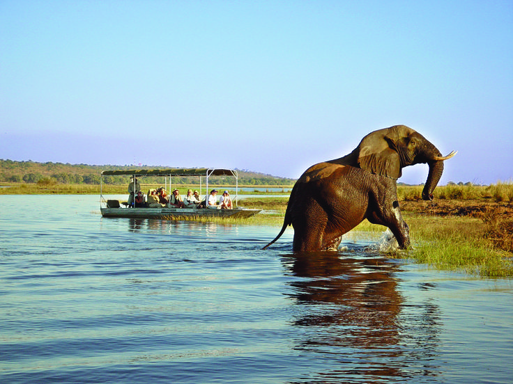 Elephant viewing off a boat or a game vehicle | Chobe | Botswana | http://underonebotswanasky.com/camps/chobe-bush-lodge.php