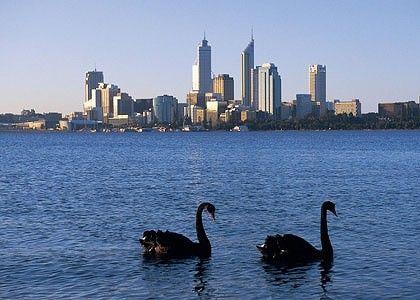 Black Swans of Perth.