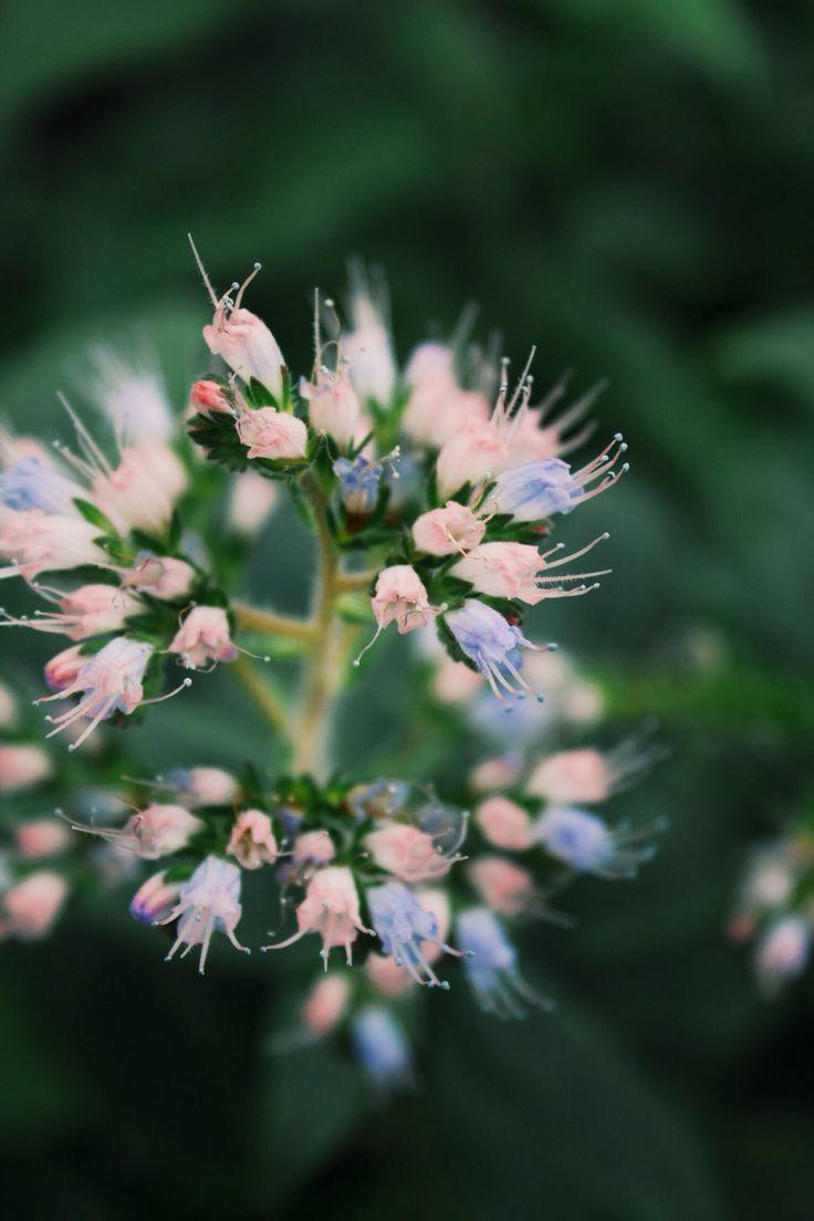 #pretty #nature #botany