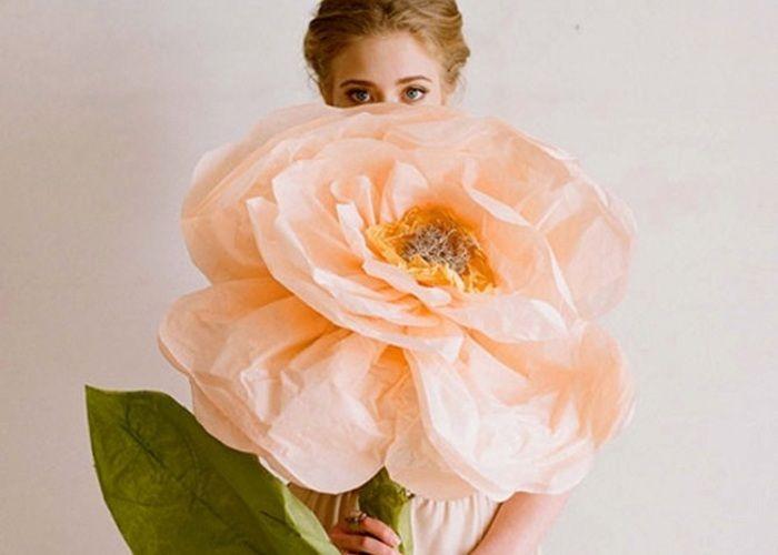 ジャイアント・ペーパーローズって知ってる?魔法みたいな大きなお花が可愛い♡のトップ画像
