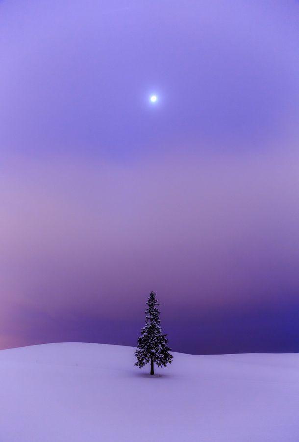 Hokkaido, Japan   こんなクリスマスも素敵!