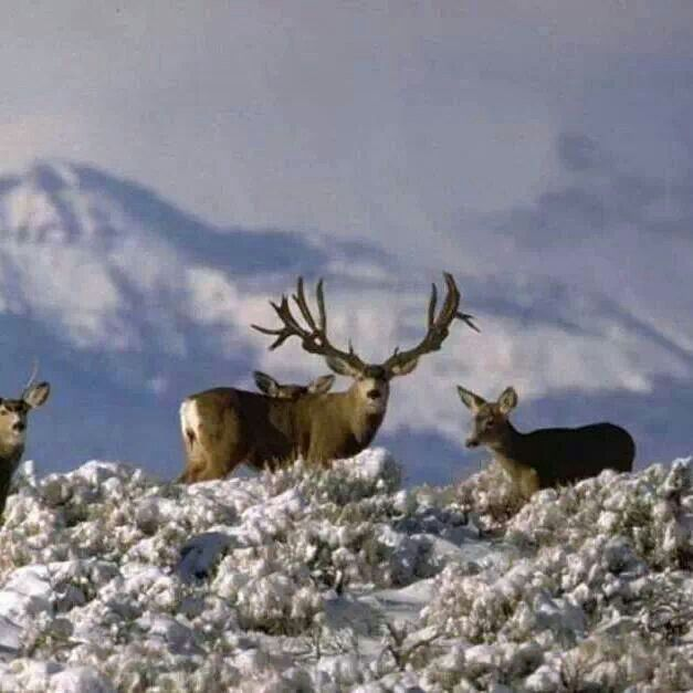 Dream buck!
