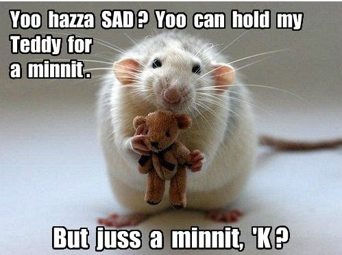 How do i convince my mom to let me get a pet rat?