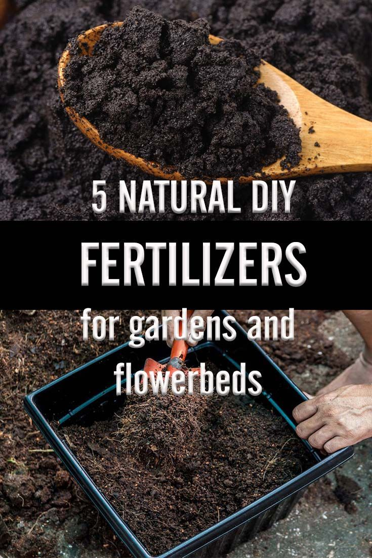 5 Natural Diy Fertilizers For Your Garden And Flowerbeds Diy