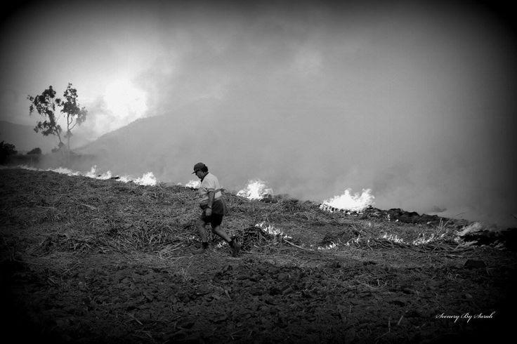 Burning sugarcane trash