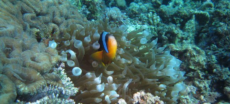 Pristine marine ecosystems