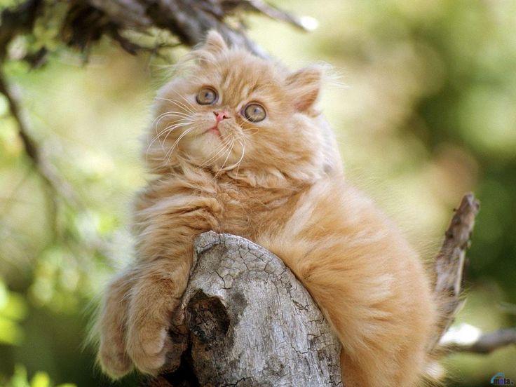 gratis skrivbordsunderlägg - Kattungar: http://wallpapic.se/djur/kattungar/wallpaper-32029