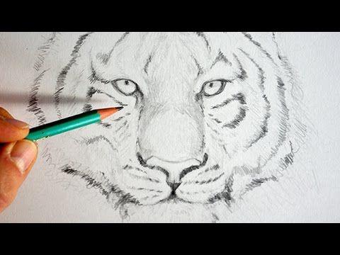 25 best ideas about coloriage tigre on pinterest - Apprendre a dessiner un tigre ...