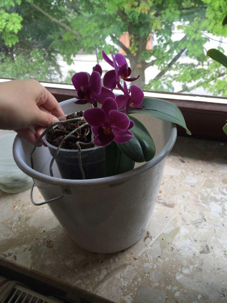 Orchideen: Die beste Pflege für exotische Pflanzen