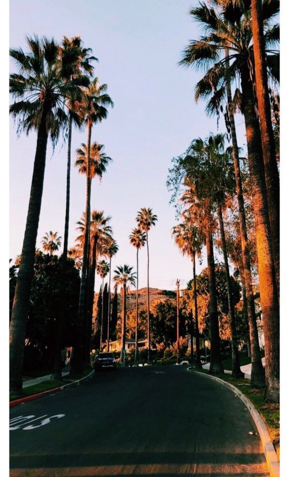 California Summer Palmtrees 2020 Wallpaper Iphone Summer Aesthetic Wallpapers Nature Photography