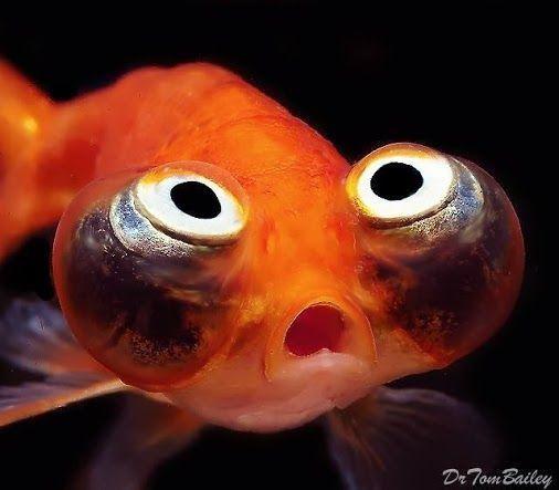 dumb looking fish google search fish reaper ref