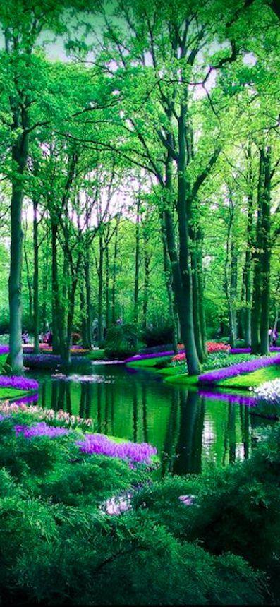 "Jardins ""Keukenhof"" aux Pays-Bas."