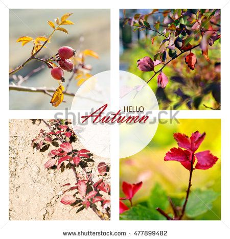 Hello Autumn wallpaper, autumn background with wonderful fall leaves and rose heaps