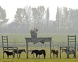 Horses stand in the shadows of a gigantic wooden table and two chairs during nice autumnal weather at a meadow near Doellstaedt, central Germany, Tuesday, Nov. 1, 2011.