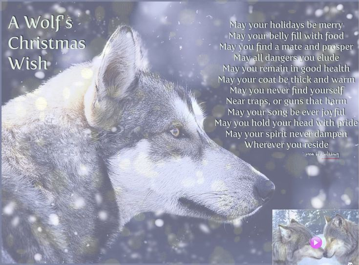 5771 best I ♥ WOLVES images on Pinterest | Animals, Wolf and ...