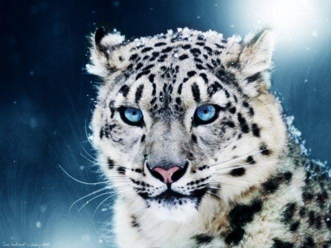 Animales en peligro de extincion o_0 que bonito