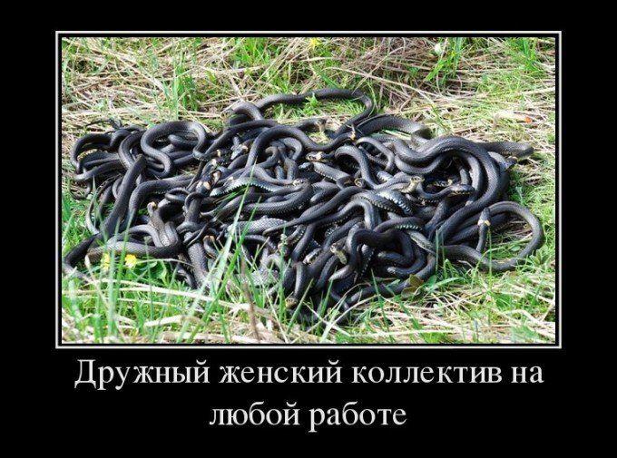 Картинки со змеями и женский коллектив (28 фото) | Картинки, Юмор, Змея