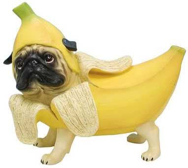 people food that is good for your dog i just wanted to pin this for you cause of the awesome pug in a banana costume but the article is good too xd - Dogs With Halloween Costumes On