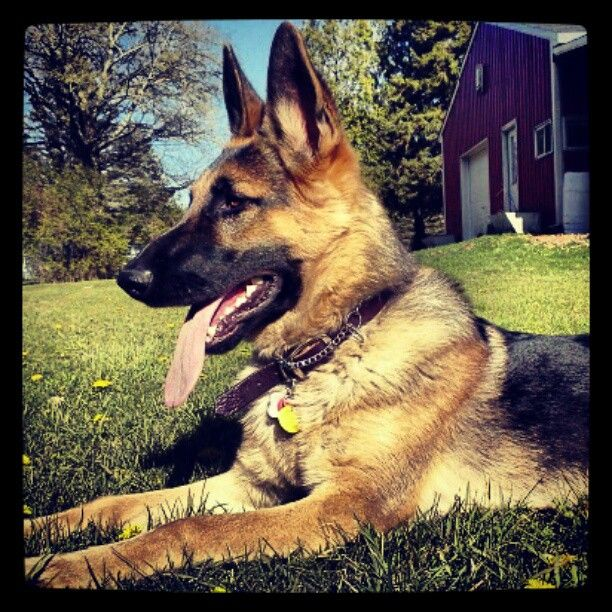 With pet bills always increasing, what will pet insurances costs me?  It is simple and easy to get the best Pet Insurance Quote  getpetinsurancequote.com
