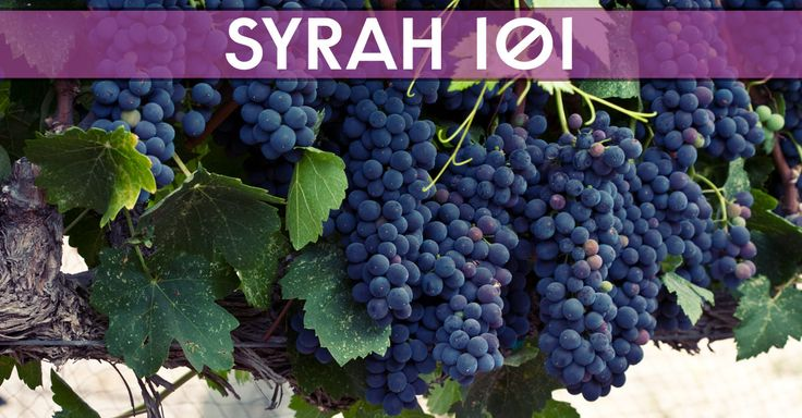 Learn About Syrah & Shiraz (They're The Same!)