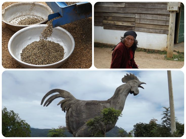 Chicken Village in Da Lat Vietnam: Including an older Vietnamese Lady and coffee beans | Move Love Eat
