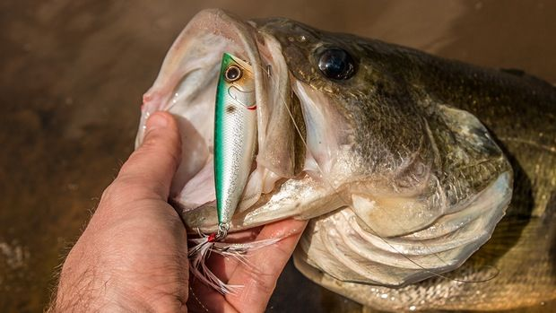 5 Spring Topwater Lures Every Bass Angler Needs - Wired2fish - Scout