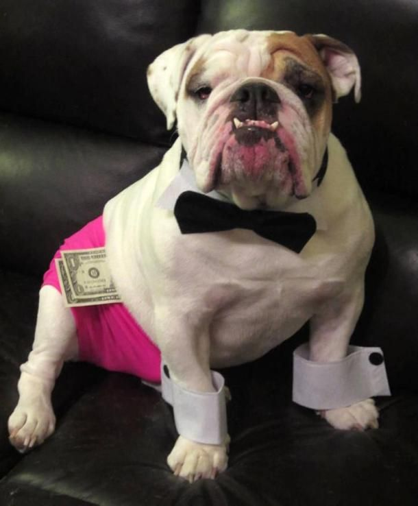 237 best Funny #Bulldogs' #costumes images on Pinterest ...