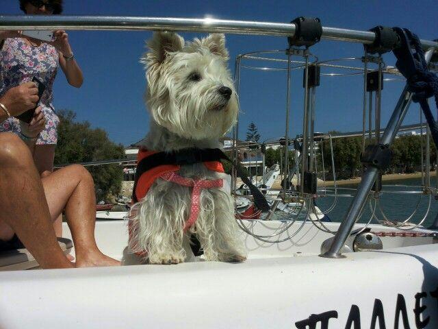Bonnie on board a shiny day in Paros