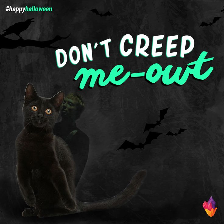 #Halloween #Quote #Puns #Spooky #Funny #Humor #Black #Cats