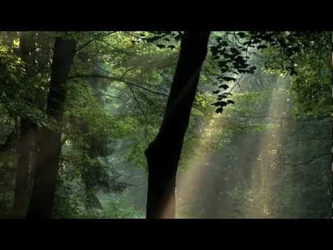 """Film przyrodniczy """"Sekretne życie drzew"""" - Drogi dla Natury"""