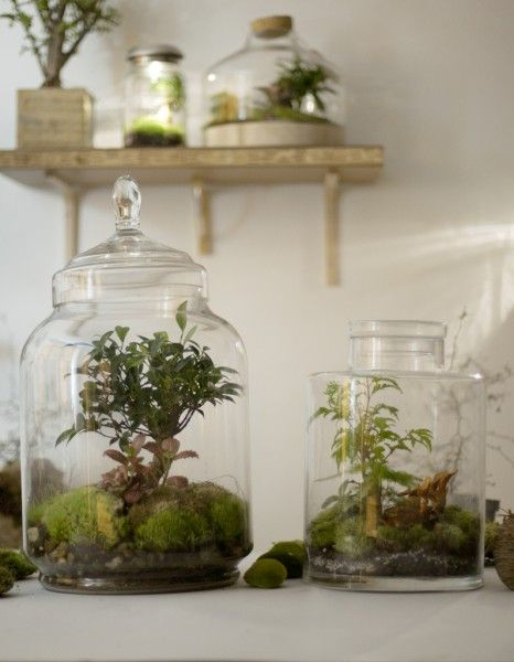 A terrarium with Bonsais!