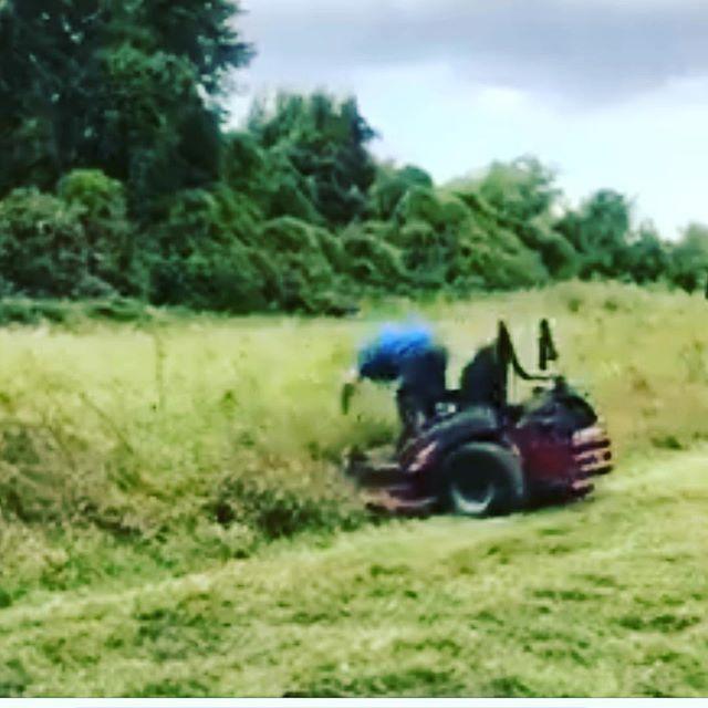 Careful What S Under That Tall Grass Folks Tall Grass Grass Lawn Care