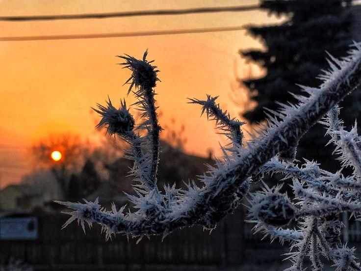 Szűcs Ákos Közelgő tavasz Napfelkelte után készült a kép. Szeretem a tél végét, amikor napközben már enyhe az idő, éjszaka pedig ráfagy a pára a növényekre. Szép alakzatokat tud formálni! Több kép Ákostól: https://www.facebook.com/i.am.akos.szucs/media_set?set=a.1521290367898313.1073741830.100000520934775&type=3