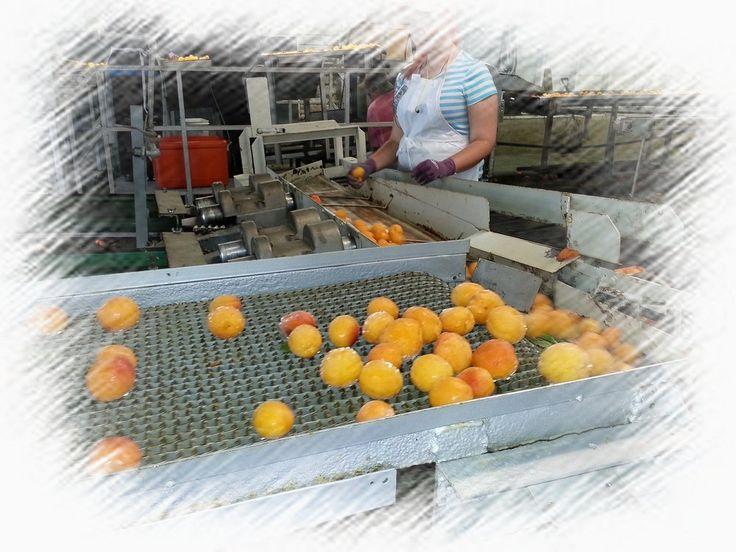 Lavado Ecológico de Frutas y Verduras