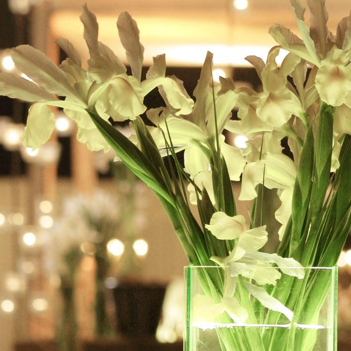 Iris Blancos