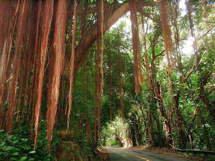 Nuuanu Pali Drive, Honolulu, Hawaii by mrdelurk