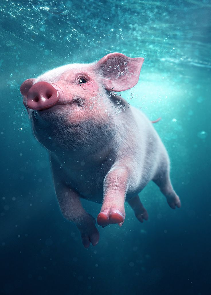 One out of three images crated for Grilstad to promote bacon under the slogun; its better with bacon in water than water in bacon.