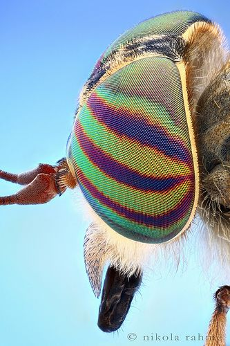 Horsefly @ 6× (microscope objective test + stereo)