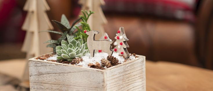 Dec 16th - workshop for kids - Cutest succulent planter with wooden  ornaments. Westcoastgardens.ca #surrey #bc #vancouver #whiterock