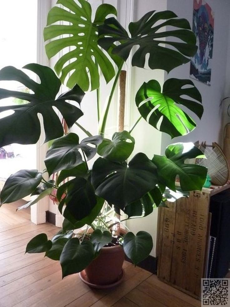 13. #Philodendron - 27 Awesome Indoor #Houseplants to Brighten up Your Home…