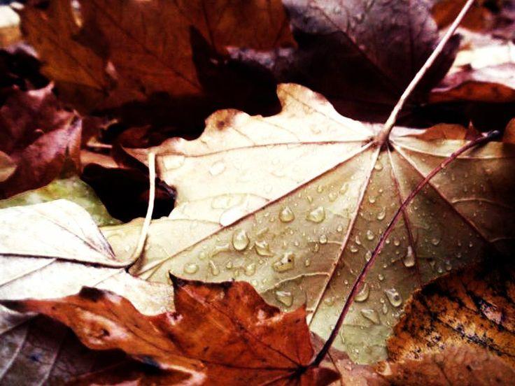 Iasi - Autumn - Parcul Copou