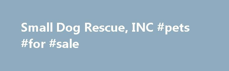 Small Dog Rescue, INC #pets #for #sale http://pet.remmont.com/small-dog-rescue-inc-pets-for-sale/  Small Dog Rescue was founded in 1998 by Dr. Emmett Wilson Jr. It is one of New Jersey s largest shelters and sanctuary for homeless dogs. Small Dog rescue accepts small dogs of all ages, conditions and needs. Over 120 dogs find loving, permanent homes every year. Many had faced imminent euthanasia and were saved by the intervention of the Small Dog Rescue which has a strict policy of allowing…