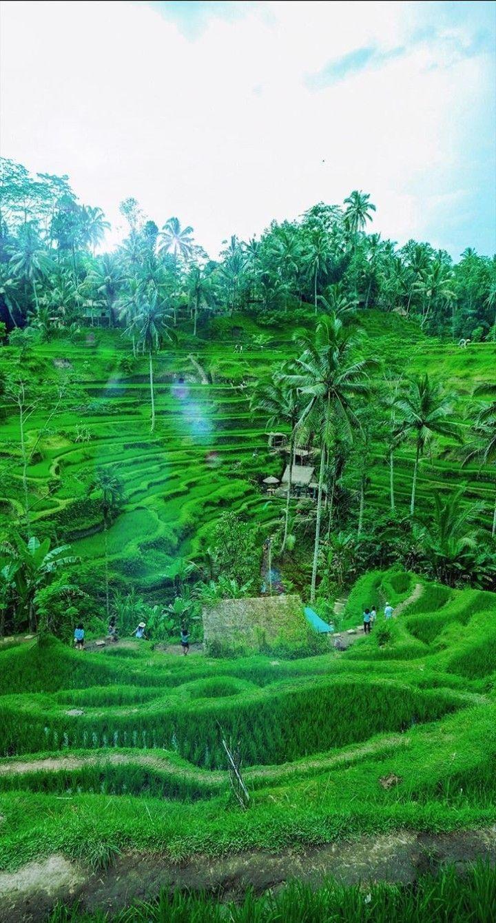 Free Wallpaper Indonesia