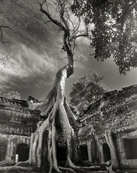 De oudste bomen op aarde vereeuwigd in surrealistische zwart-wit foto's | The Creators Project